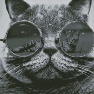 Животные - семейство кошачьих